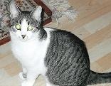 Katze Murli Tiersuche