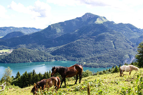 Aussicht auf Schafberg und Wolfgangsee