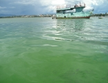 Blaualgen am Meer