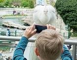 Pfau und Kind mit Handy