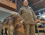 Viehversteigerung