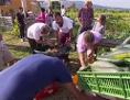 Garten der Begegnung in Traiskirchen