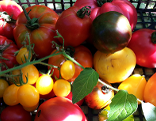 Suti kocht Tomatencremesuppe