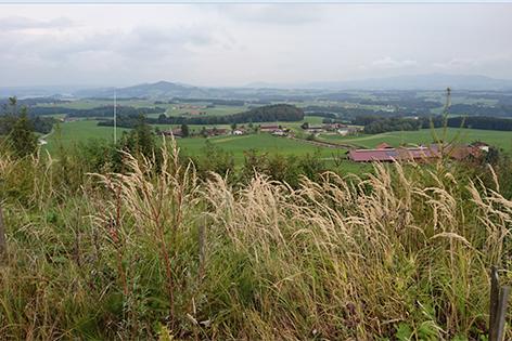 Ausblick vom Panoramarundweg Haunsberg