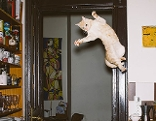 Katzenbild aus Amsterdam