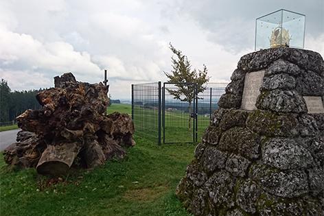 Kaiserbuche