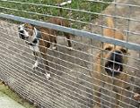 Tierfreunde kritisieren Tierheim