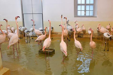 Flamingos in Winterquartier