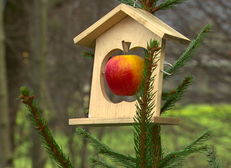 Apfel als Vogelfutter im Baum