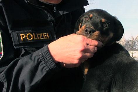 Polizeihunde: Training jetzt ab Welpenalter