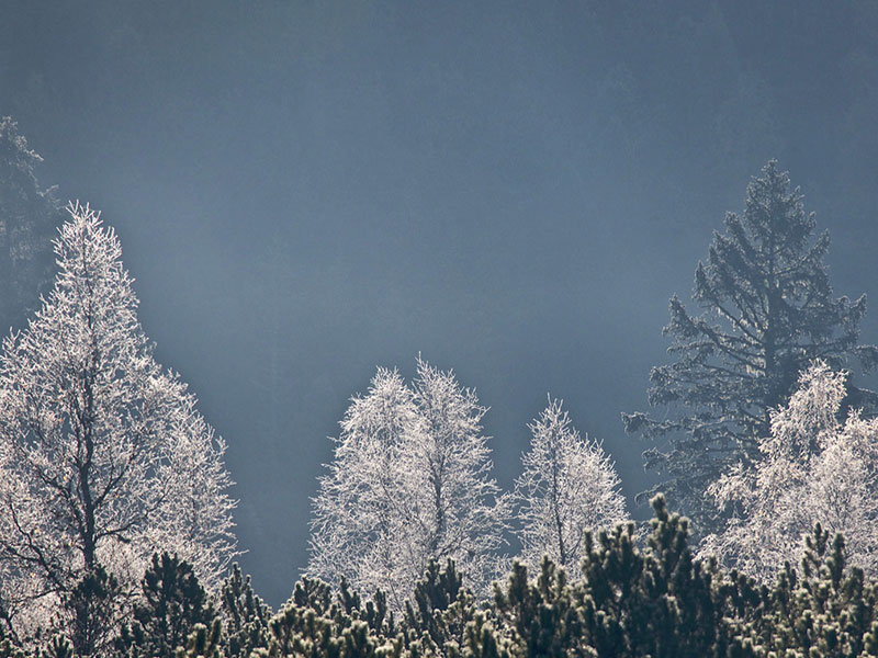 Naturfotograf Helmut Moik