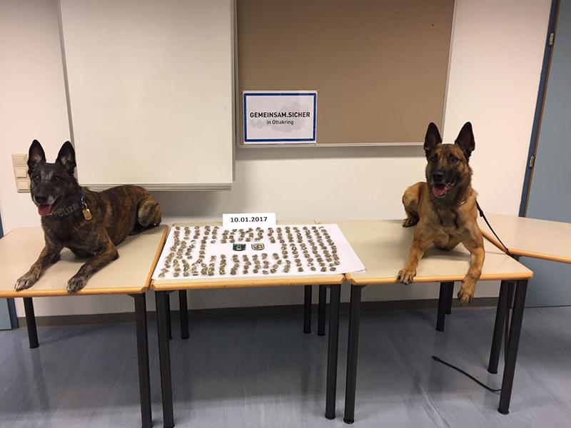 Diensthunde der Polizei
