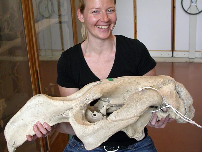 Seekuh-Expertin Manja Voß mit einem Seekuhschädel aus dem 18. Jahrhundert
