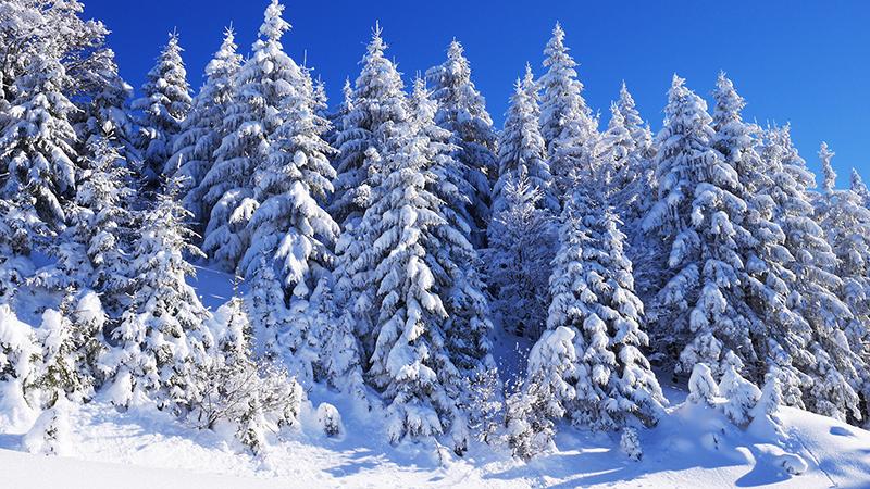 Winter Pulverschnee Weihnachten Wald Bergwald Berge Alpinismus