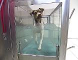 Therapiezentrum für Tiere in Parndorf