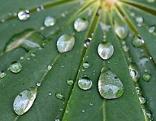 Regentropfen perlen ab