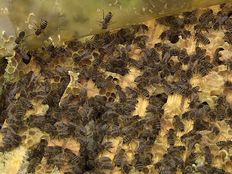 Bienen zum Valentinstag
