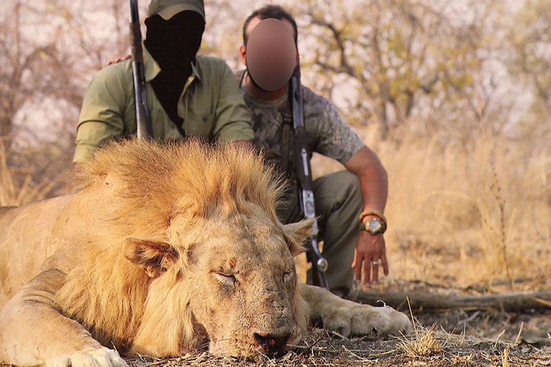 Jäger mit erlegtem Löwen auf Safari in Afrika