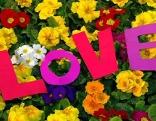 Blumen LOVE