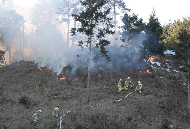 Feuerwehrleute bekämpfen Waldbrand
