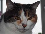 Katze Lara