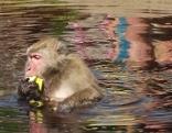 Makakenforschung