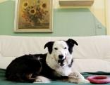 Hund auf einem Sofa