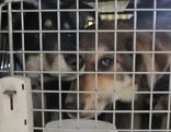 beschlagnahmte Hunde