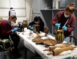 Reinigung bei der Dokumentation der Objekte für das Schaudepot in Korneuburg