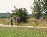 Radfahrer im Nationalpark Neusiedler See