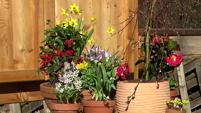 Erste Frühlingsblumen