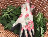 Brennnessel, Löwnzahn im Korb mit Handschuh