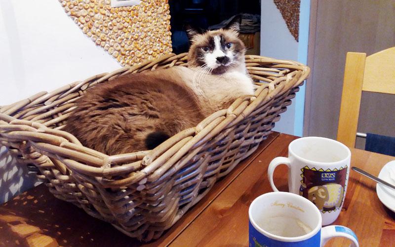 Katze liegt in einem Korb auf dem Tisch