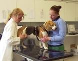 Hund wird behandelt