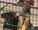 Welpen Illegaler Tiertransport
