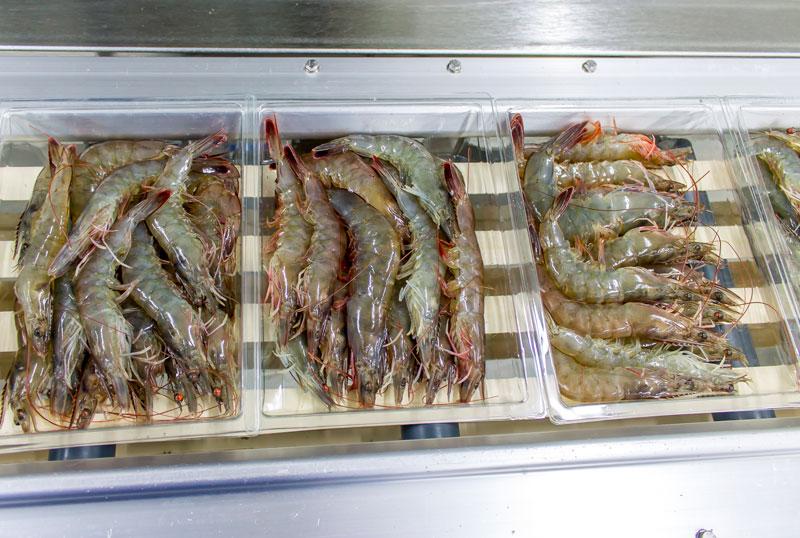 Fangfrische Garnelen aus Hall