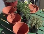 Gut gepflanzt Inés Kräuter