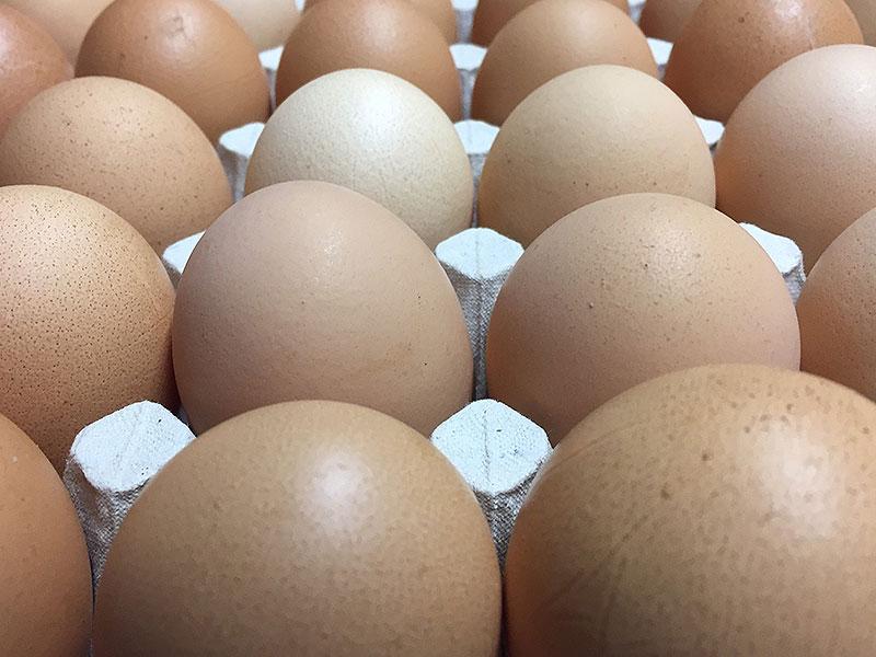 Geschmackssache Ei, Hühner, Eier