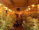Cannabis Plantage in Ottakring