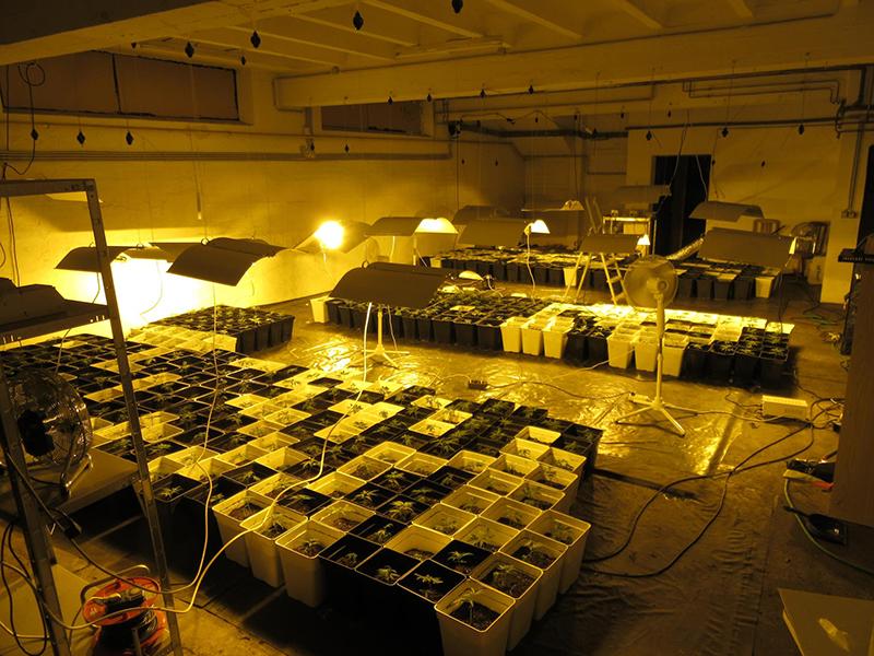 Cannabisplantage Korneuburg entdeckt