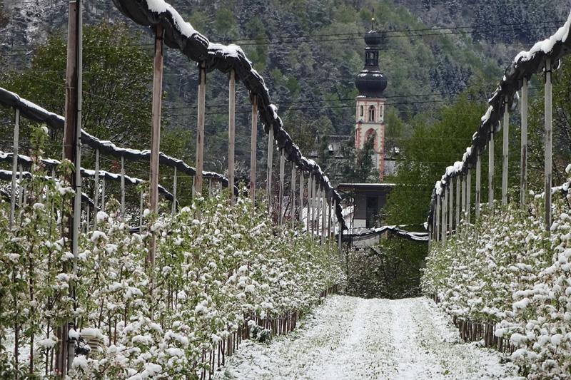 Apfelplantage in Haiming im Schnee