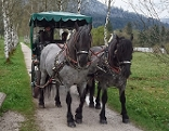 Blinkingmoos in Strobl