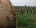 slama i vinograd