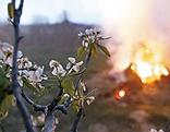 Blüten an einem Baum