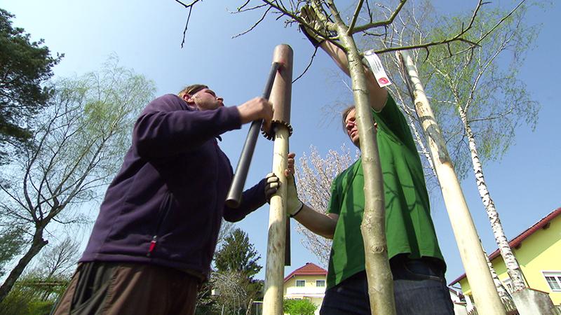 Obstbäume schnelle Ernte im frühjahr setzen im Herbst schon ernten