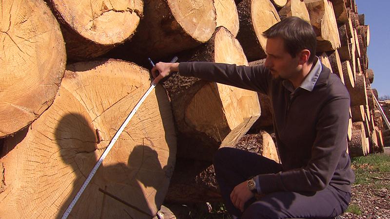 Sägewerk für Starkholz in Burgauberg