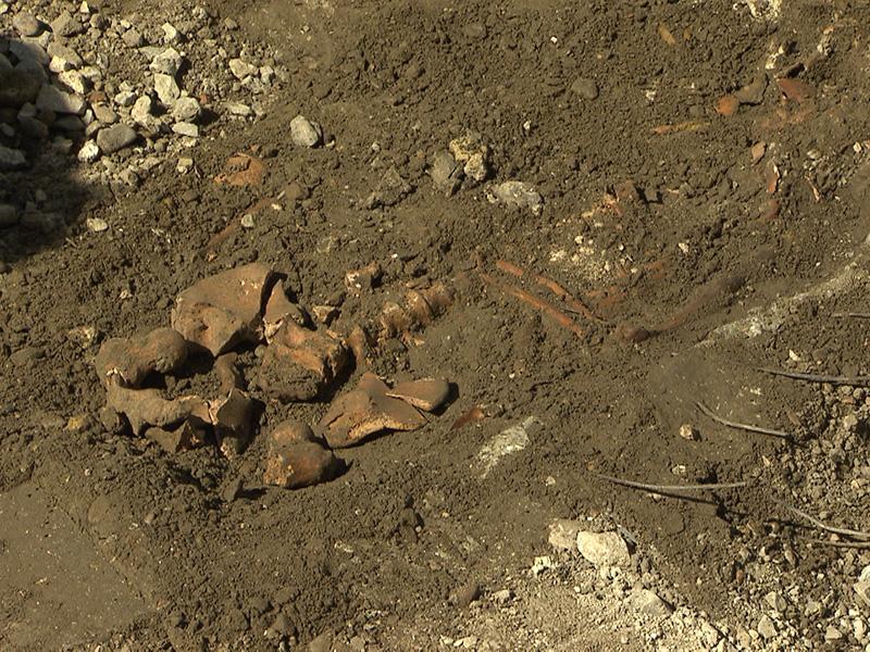 Skelett Stephansplatz