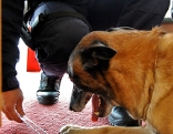 Polizei Hund Training Übung