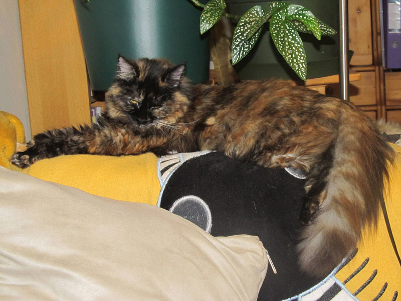 Katze Mommo vermisst