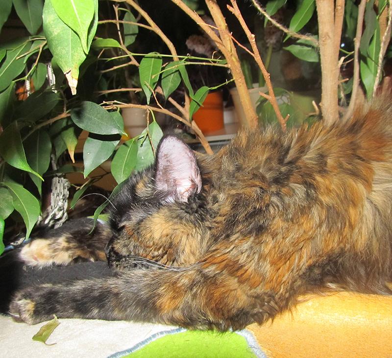 Katze in Josefiau weg